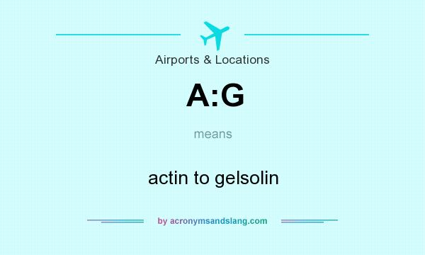 What does A:G mean? It stands for actin to gelsolin