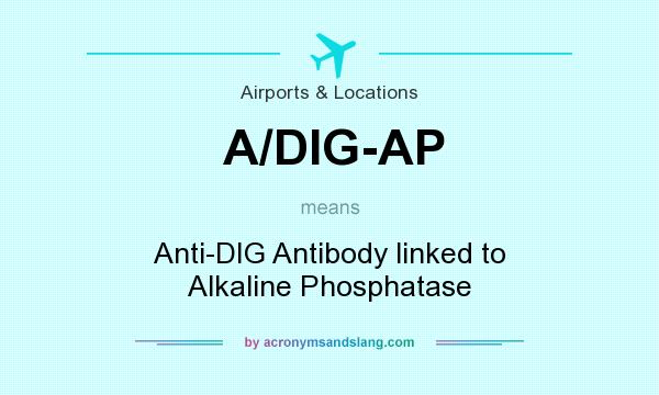 What does A/DIG-AP mean? It stands for Anti-DIG Antibody linked to Alkaline Phosphatase
