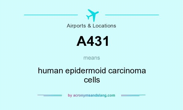 What does A431 mean? It stands for human epidermoid carcinoma cells