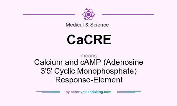 What does CaCRE mean? It stands for Calcium and cAMP (Adenosine 3`5` Cyclic Monophosphate) Response-Element