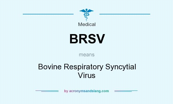 What does BRSV mean? It stands for Bovine Respiratory Syncytial Virus