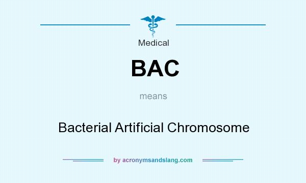 What does BAC mean? It stands for Bacterial Artificial Chromosome