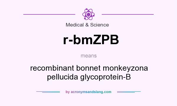 What does r-bmZPB mean? It stands for recombinant bonnet monkeyzona pellucida glycoprotein-B