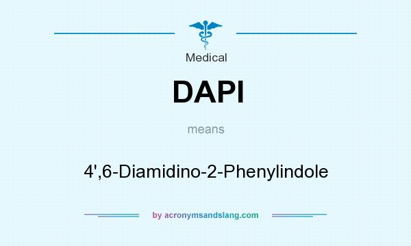 What does DAPI mean? It stands for 4`,6-Diamidino-2-Phenylindole
