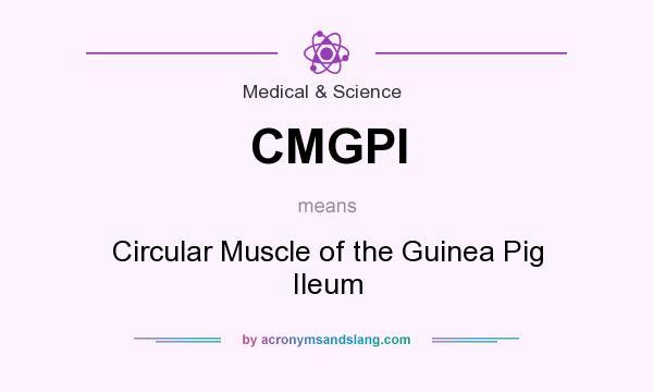 guinea pig ileum