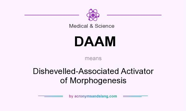 What does DAAM mean? It stands for Dishevelled-Associated Activator of Morphogenesis