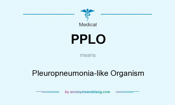 What does PPLO mean? It stands for Pleuropneumonia-like Organism