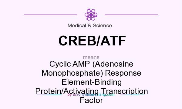 What does CREB/ATF mean? It stands for Cyclic AMP (Adenosine Monophosphate) Response Element-Binding Protein/Activating Transcription Factor
