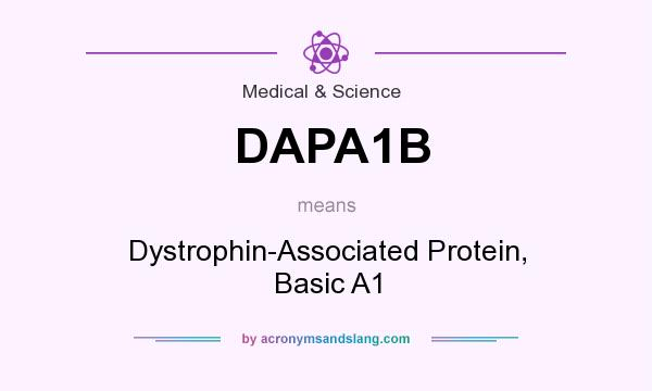What does DAPA1B mean? It stands for Dystrophin-Associated Protein, Basic A1