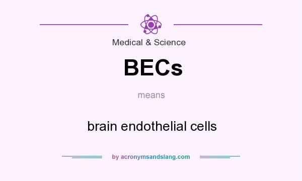 What does BECs mean? It stands for brain endothelial cells