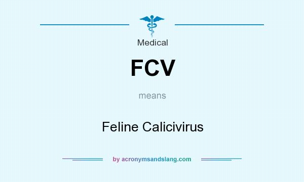 What does FCV mean? It stands for Feline Calicivirus