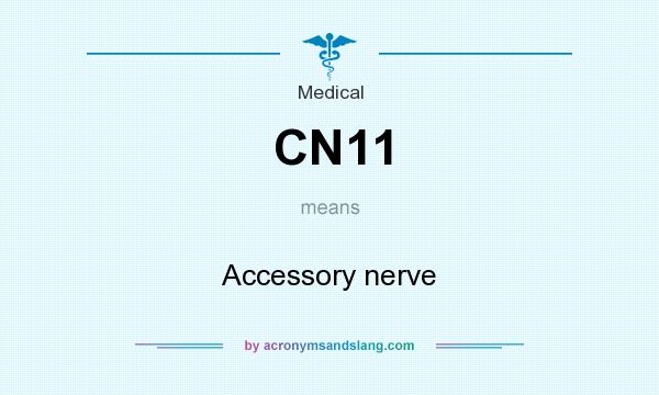 What does CN11 mean? It stands for Accessory nerve