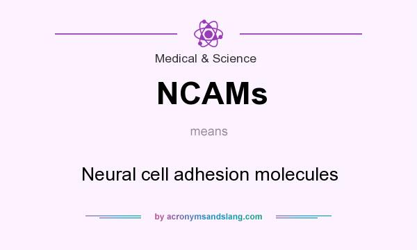 What does NCAMs mean? It stands for Neural cell adhesion molecules