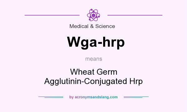 What does Wga-hrp mean? It stands for Wheat Germ Agglutinin-Conjugated Hrp