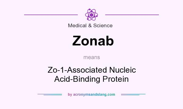 What does Zonab mean? It stands for Zo-1-Associated Nucleic Acid-Binding Protein