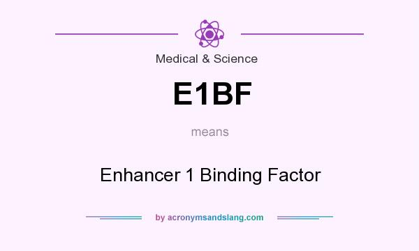 What does E1BF mean? It stands for Enhancer 1 Binding Factor