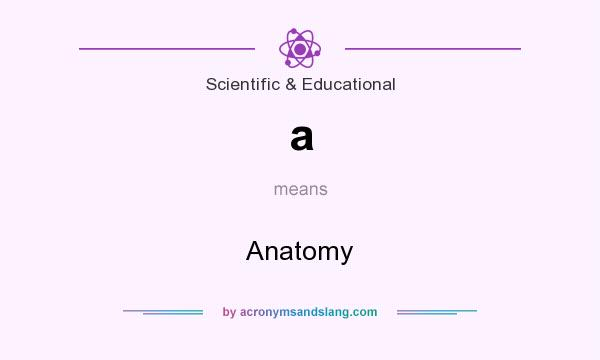 What does a mean? It stands for Anatomy
