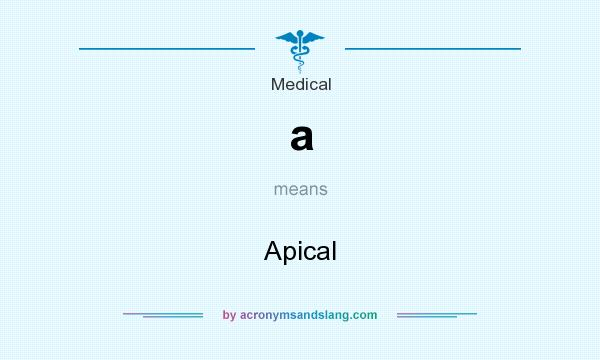 What does a mean? It stands for Apical