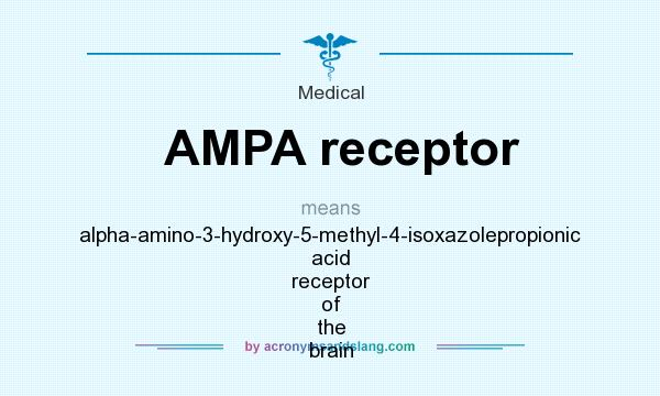 What does AMPA receptor mean? It stands for alpha-amino-3-hydroxy-5-methyl-4-isoxazolepropionic acid receptor of the brain