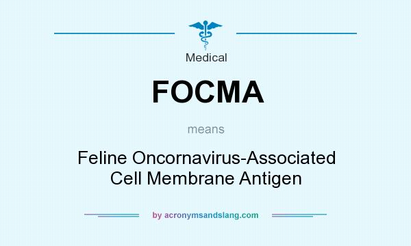 What does FOCMA mean? It stands for Feline Oncornavirus-Associated Cell Membrane Antigen