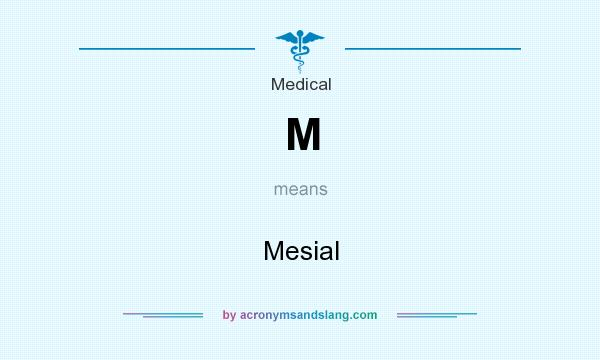 What does M mean? It stands for Mesial