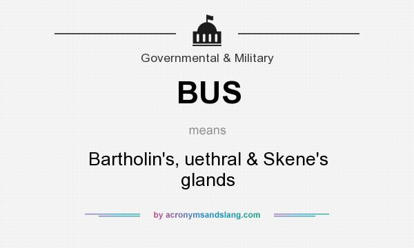 What does BUS mean? It stands for Bartholin`s, uethral & Skene`s glands
