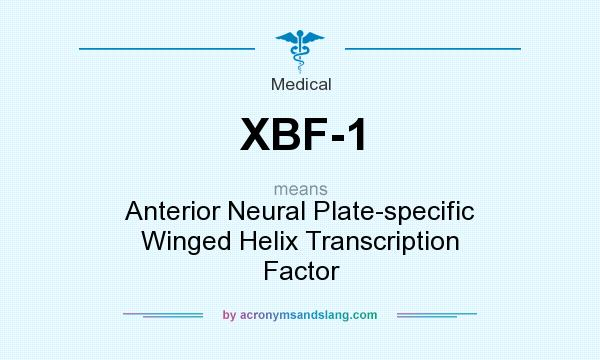What does XBF-1 mean? It stands for Anterior Neural Plate-specific Winged Helix Transcription Factor