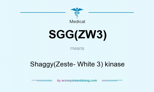 What does SGG(ZW3) mean? It stands for Shaggy(Zeste- White 3) kinase