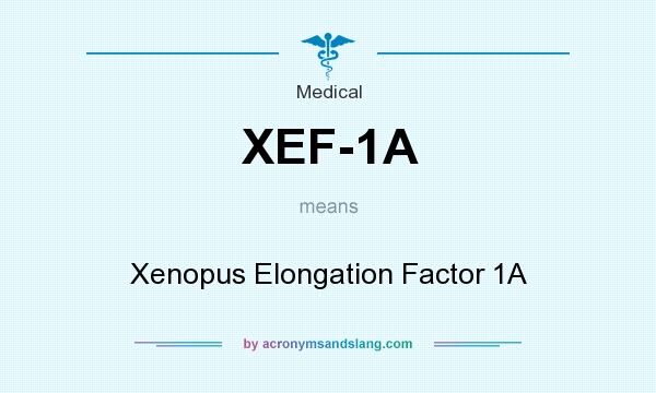 What does XEF-1A mean? It stands for Xenopus Elongation Factor 1A