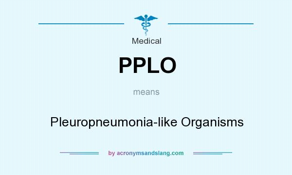 What does PPLO mean? It stands for Pleuropneumonia-like Organisms