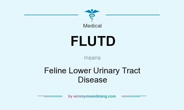 What does FLUTD mean? It stands for Feline Lower Urinary Tract Disease