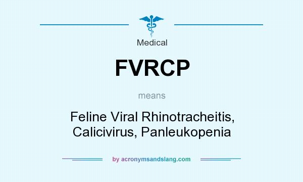 What does FVRCP mean? It stands for Feline Viral Rhinotracheitis, Calicivirus, Panleukopenia