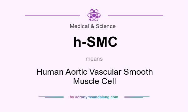 What does h-SMC mean? It stands for Human Aortic Vascular Smooth Muscle Cell