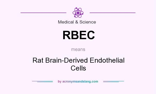 What does RBEC mean? It stands for Rat Brain-Derived Endothelial Cells