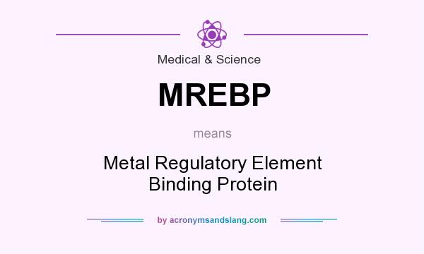 What does MREBP mean? It stands for Metal Regulatory Element Binding Protein
