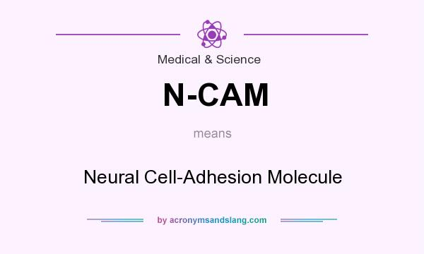 What does N-CAM mean? It stands for Neural Cell-Adhesion Molecule