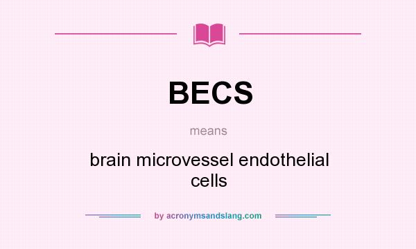 What does BECS mean? It stands for brain microvessel endothelial cells