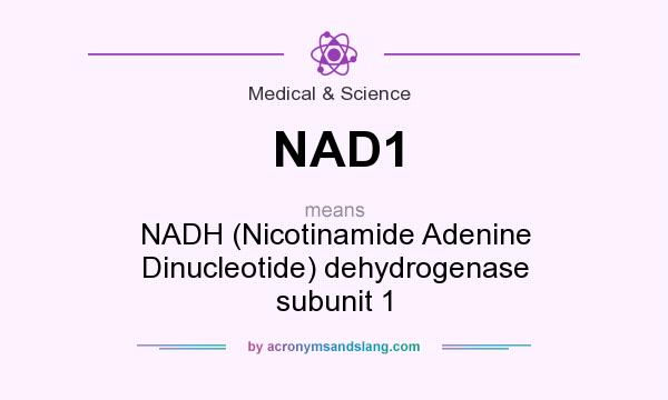 What does NAD1 mean? It stands for NADH (Nicotinamide Adenine Dinucleotide) dehydrogenase subunit 1
