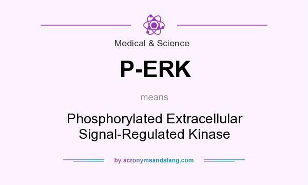 What does P-ERK mean? It stands for Phosphorylated Extracellular Signal-Regulated Kinase