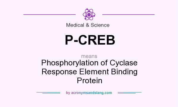 What does P-CREB mean? It stands for Phosphorylation of Cyclase Response Element Binding Protein