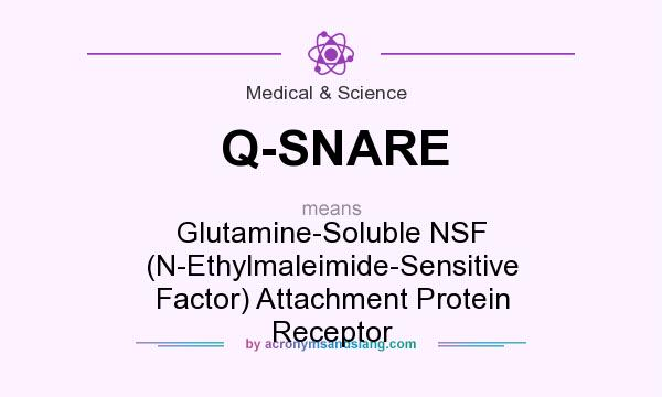 What does Q-SNARE mean? It stands for Glutamine-Soluble NSF (N-Ethylmaleimide-Sensitive Factor) Attachment Protein Receptor