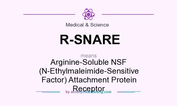 What does R-SNARE mean? It stands for Arginine-Soluble NSF (N-Ethylmaleimide-Sensitive Factor) Attachment Protein Receptor