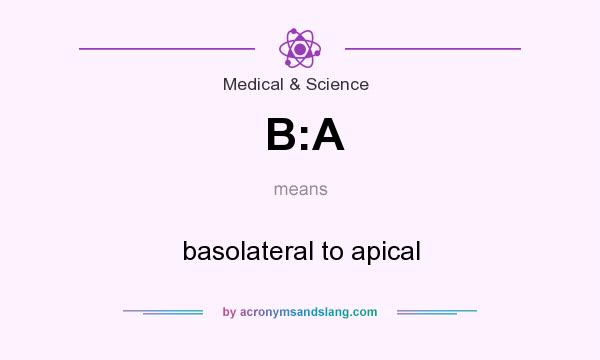 What does B:A mean? It stands for basolateral to apical