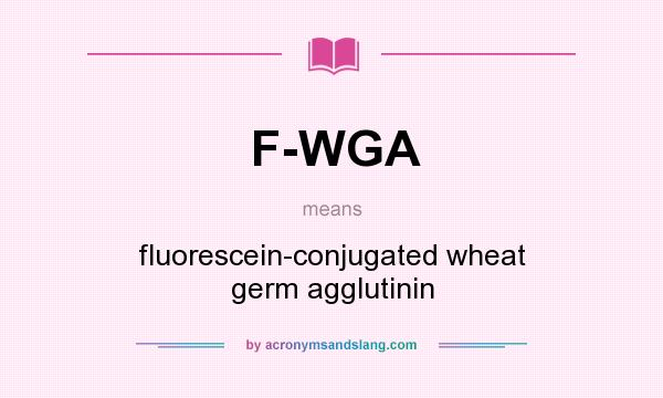 What does F-WGA mean? It stands for fluorescein-conjugated wheat germ agglutinin