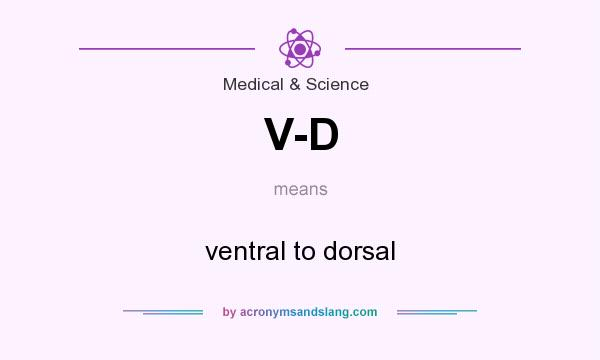What does V-D mean? It stands for ventral to dorsal