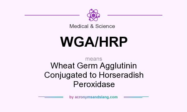 What does WGA/HRP mean? It stands for Wheat Germ Agglutinin Conjugated to Horseradish Peroxidase