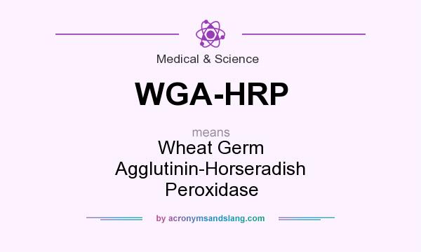 What does WGA-HRP mean? It stands for Wheat Germ Agglutinin-Horseradish Peroxidase