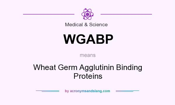 What does WGABP mean? It stands for Wheat Germ Agglutinin Binding Proteins