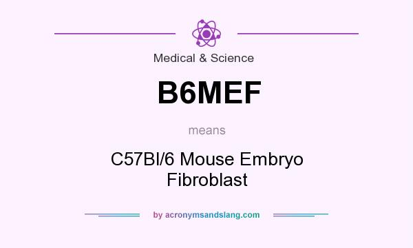What does B6MEF mean? It stands for C57Bl/6 Mouse Embryo Fibroblast