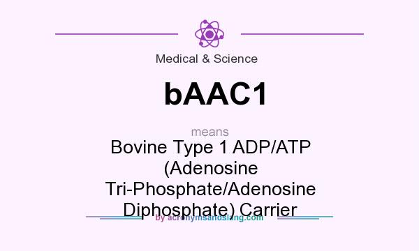 What does bAAC1 mean? It stands for Bovine Type 1 ADP/ATP (Adenosine Tri-Phosphate/Adenosine Diphosphate) Carrier